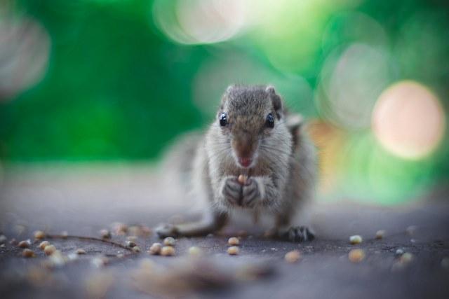 Ne t'inquiète pas, manger des graines ne fera pas de toi un hamster...