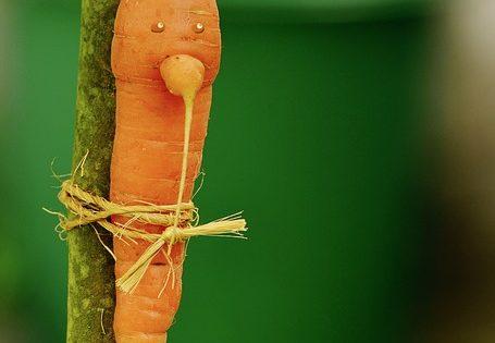 Le régime crudivore ou raw diet consiste à manger tout cru pour un max de nutriments.